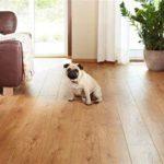 Laminate Flooring for Dog