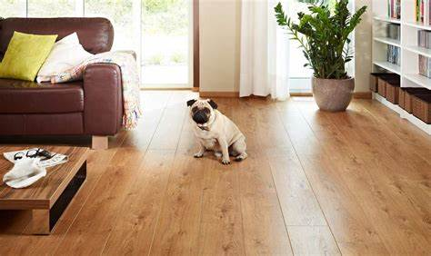 Laminate Flooring for Dog