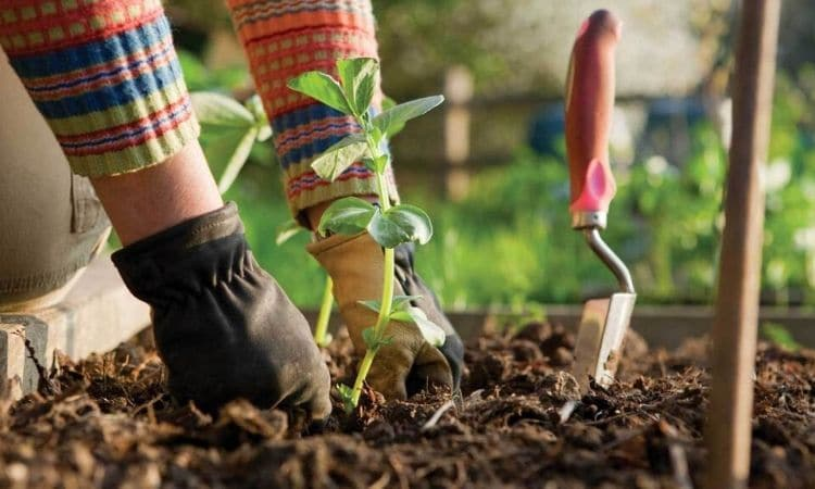 Gardening A Hobby That Can Give Us A Lot